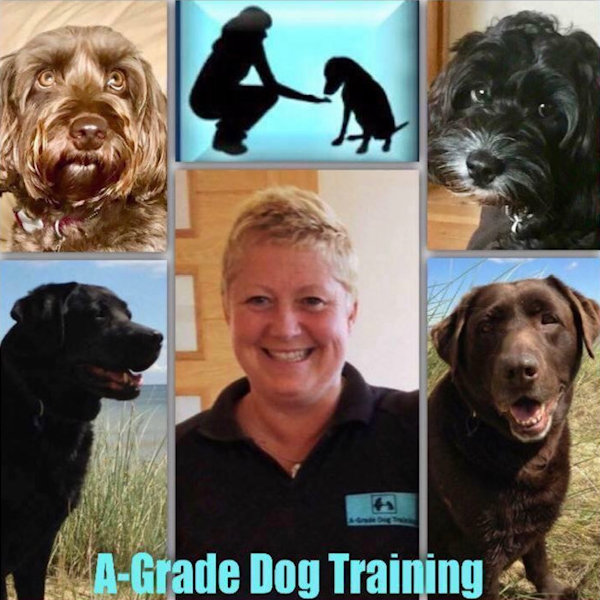 Search for Dog Trainers in Scotland