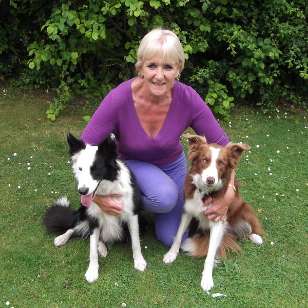 Search for Dog Trainers in Wales