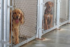 bigstock_Animal_Shelter_Kennel_1987191